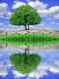 Solitary tree reflected in the water against the blue sky Stock Image