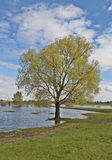 Solitary tree on riverbank Royalty Free Stock Photo