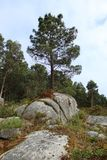 Solitary tree on rocks with trees bottom. royalty free stock photos