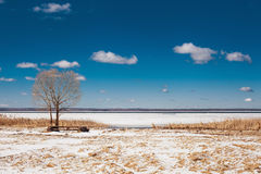 Solitary tree on the shore of lake. Winter day on the lake. Blue sky , snow and yellow grass stock image