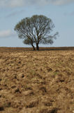 A solitary tree Royalty Free Stock Photography