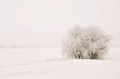 Solitary tree in the snow Stock Photos