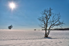 Solitary tree in a snowy field Stock Images