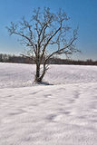 Solitary tree in a snowy field Royalty Free Stock Photography