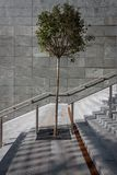 Solitary tree on a stairway Stock Photos
