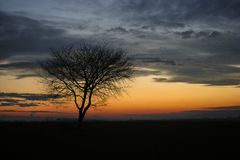 Silhouette of a lone tree against the twilight sky during blue hour in Transylvania, Romania stock photos