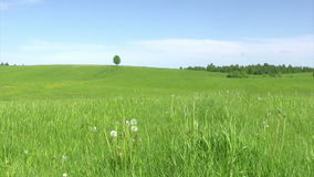 Solitary tree, summer landscape. Lonely tree on green meadow against  blue sky background stock video footage