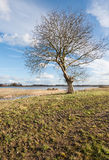 Solitary tree on a sunny day in the winter season Royalty Free Stock Images
