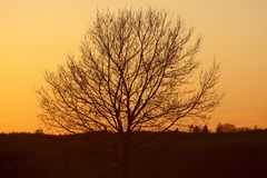 Solitary tree in the sunset Stock Photography