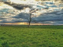 Solitary tree Stock Image