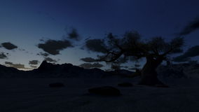 Solitary tree at surrounded by mountains, timelapse sunrise, stock footage. Video stock video