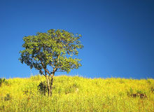 Solitary tree under beautiful sky. Solitary tree under beautiful blue sky stock image