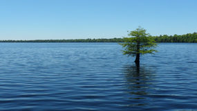 Solitary tree in water – landscape. A tree stands alone, solitary in the blue waters of a rippled lake Stock Photo