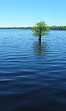 Solitary tree in water. A tree stands alone, solitary in the blue waters of a rippled lake Royalty Free Stock Photo