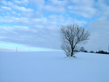 Solitary tree in winter field. Solitary tree on hill Stock Photo