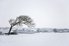 Solitary tree in a winter landscape Stock Photography