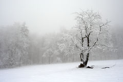Solitary tree in winter, snowy landscape with snow and fog, foggy forest in the backgroud. Solitary tree in winter, snowy landscape with snow Royalty Free Stock Images