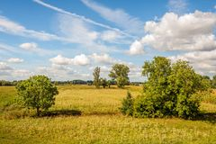 Solitary trees in a dehydrated Dutch nature area on a sunny day. Solitary trees in a dehydrated nature reserve on a sunny day in the Dutch summer season. Most of stock image