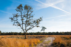 Solitary trees in a Dutch nature reserve in autumn Stock Images