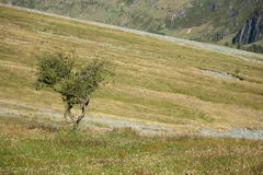 Solitary trees on grassy slope Stock Photo