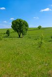 Solitary trees in a meadow Stock Images