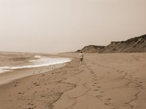 Solitary Walk in Sepia. A young man walking on the beach in eastham, massachusetts on cape cod royalty free stock photos