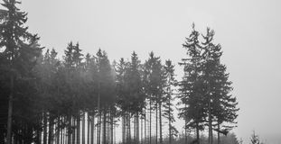 Solitary woods in black and white Royalty Free Stock Images