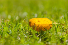 Solitary yellow autumn leaf Stock Photography