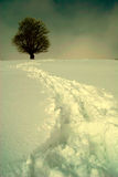 Solitude. One tree on a winter background Royalty Free Stock Image