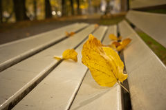 Solitude. Yellow leaf on an empty bench in park in fall season Royalty Free Stock Photography