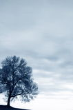 Solitude. Solitary tree against open sky - background Royalty Free Stock Image
