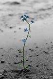 Solitude Photographie stock libre de droits