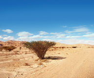 Solitude. A lonely tre in the desert Royalty Free Stock Photo