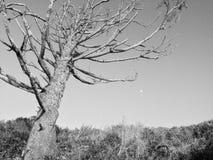 solitude Imagens de Stock