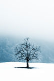 Solitude. Lonely tree in foggy winter scene royalty free stock photo