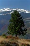 Solitude. Of a tree on Tulisa Mountain Royalty Free Stock Photos