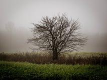 solitude Fotografia Stock