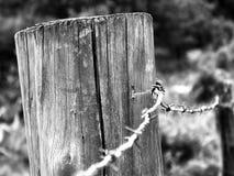 solitude Fotografia Stock Libera da Diritti