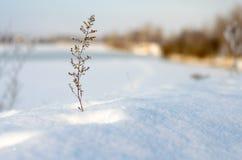 Solitude d'hiver. Photo stock