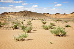 Solitude in the desert Stock Photography