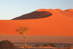 Solitude desert. Tree at the base of a sand dune, Namibia, Africa Stock Photo