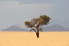 Solitude desert tree Royalty Free Stock Images