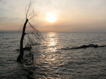 Solitude - flooded tree. Flooded tree in the lake's waters at sunrise Stock Photos