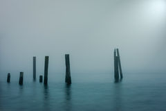 Solitude. Lone Cormorant in the fog near Sidney, British Columbia, Canada Stock Photo