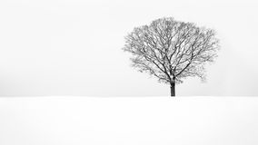 Solitude - Lone snowy tree Royalty Free Stock Image