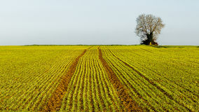 The lonely tree on farmland Stock Photos