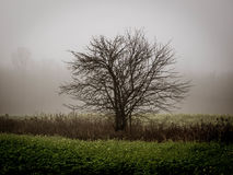 Solitude. A morning with big fog Stock Photography