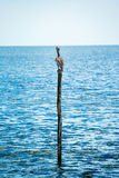 Solitude and peace in nature. Bird on a pole in the sea. Stock Images