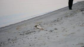 solitude A pessoa só na roupa escura anda ao longo da praia vídeos de arquivo