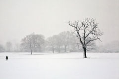 Solitude in the snow Stock Photography